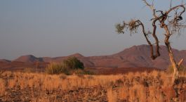 Destination Damaraland (Palmwag) Namibia