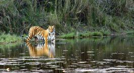 Reiseziel Pench Zentral- & Westindien
