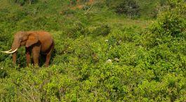 Reiseziel Aberdares Kenia