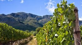 Destination Stellenbosch South Africa