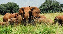 Destination Kidepo Valley Uganda