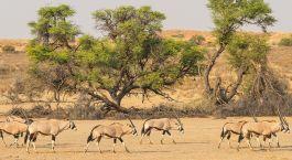Destination Kgalagadi Botswana