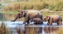 Destination Jim Corbett East India