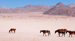 Destination Aus Namibia