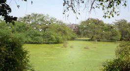 Bharatpur Norte de India
