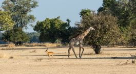 Destination South Luangwa Zambia