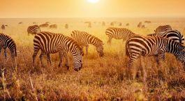 Destination Mikindani Tanzania