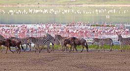 Destination Manyara & Ngorongoro Tanzania