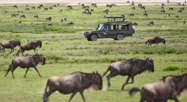 Destination Serengeti (Northern) Tanzania