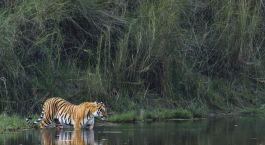 Reiseziel Tadoba Zentral- & Westindien