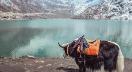 Gangtok Inde De l'est