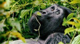 Destination Cyangugu Rwanda