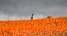 Destination Namaqualand South Africa
