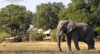 Example private tour: Botswana Safari Highlights