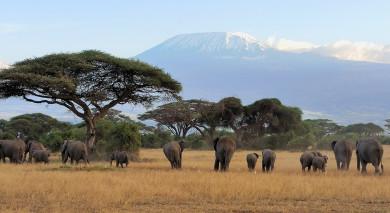 Empfohlene Individualreise, Rundreise: Nord-Tansania, ganz klassisch