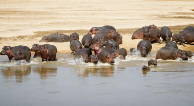 Empfohlene Individualreise, Rundreise: Sambia Safari – weite Landschaften und wilde Tierwelt