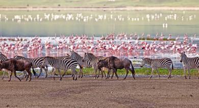 Empfohlene Individualreise, Rundreise: Tansania – Safari Abenteuer und romantisches Sansibar