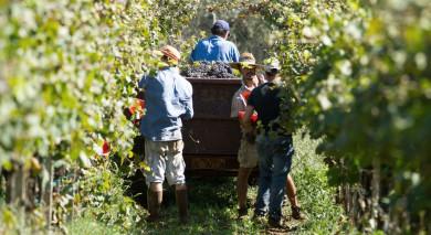 Empfohlene Individualreise, Rundreise: Argentinien – Wein und Wasserfälle