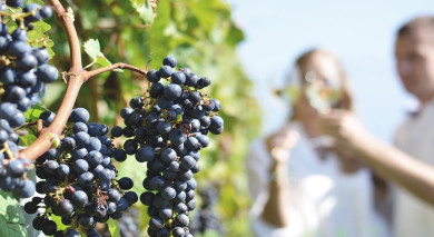 Example private tour: Chile: Lakes and Wine