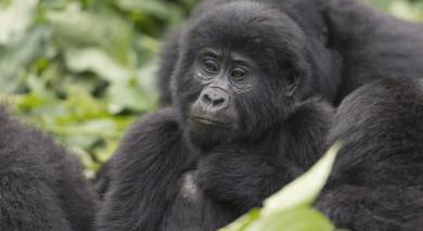 Empfohlene Individualreise, Rundreise: Ruanda und Tansania – Gorilla Trekking und Sansibar