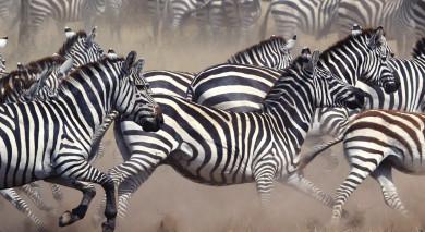Empfohlene Individualreise, Rundreise: Tansania & Botswana: Vom Kilimandscharo zu den Viktoriafällen