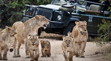 Example private tour: South Africa Safari Magic
