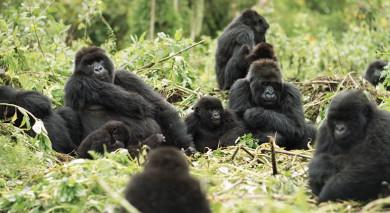 Empfohlene Individualreise, Rundreise: Tansania und Ruanda – Gorilla Trekking und Safaris