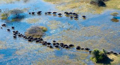 Example private tour: Botswana and Victoria Falls: Safari Magic