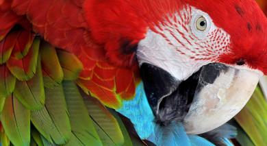 Empfohlene Individualreise, Rundreise: Vogelbeobachtung in Guatemala