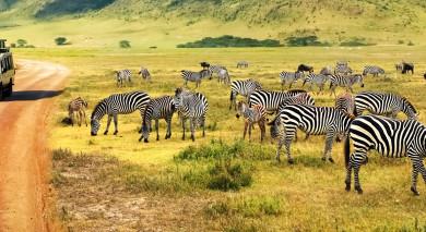 Empfohlene Individualreise, Rundreise: Tansanias Safari-Klassiker und Strandurlaub auf Mauritius