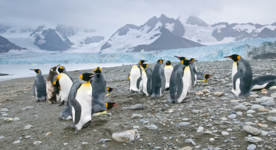 Example private tour: Penguin Safari: South Georgia and Antarctic Peninsula