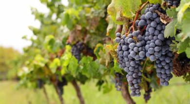 Empfohlene Individualreise, Rundreise: Auf dem Weinwanderweg durch Neuseeland