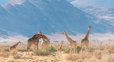 Empfohlene Individualreise, Rundreise: Namibia & Südafrika: Die Highlights des Südens