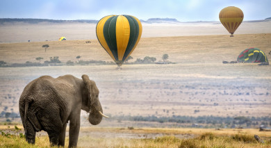 Example private tour: Wings Over Kenya: Safari and Beach