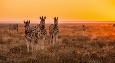 Example private tour: Road Trip: South Africa, Namibia and Victoria Falls