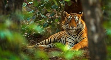 Example private tour: Tiger Safari in India and the Taj Mahal