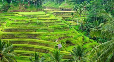 Empfohlene Individualreise, Rundreise: Singapur & Bali – Klassiker und Strand