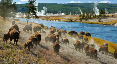 Example private tour: Road Trip: Yellowstone and Grand Teton Explorer