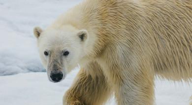Empfohlene Individualreise, Rundreise: Russische Arktis – Franz Josef Land und Nowaja Semlja