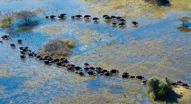 Empfohlene Individualreise, Rundreise: Krüger, Viktoriafälle & Okavango Delta – die Höhepunkte des südlichen Afrika