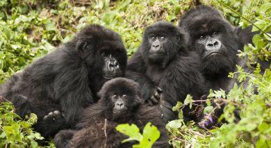 Empfohlene Individualreise, Rundreise: Kenia & Ruanda: Herzklopfen beim Gorilla Tracking