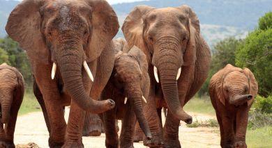 Empfohlene Individualreise, Rundreise: Große Rundreise im südlichen Afrika
