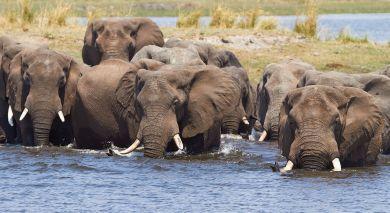 Empfohlene Individualreise, Rundreise: Botswana & Simbabwe hautnah: Viktoriafälle, Chobe & Okavango Delta