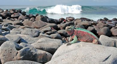 Example Private Tour Galapagos Natures Secrets Revealed