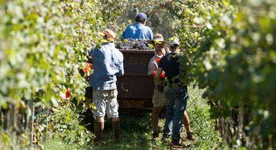 Empfohlene Individualreise, Rundreise: Argentinien: Wein und Wasserfälle