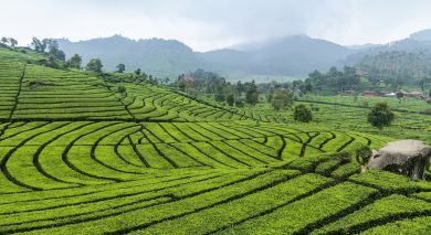 Example private tour: Simply Sri Lanka: Temples & Tea