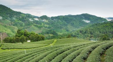 Example private tour: The British Tea Legacy
