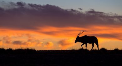 Empfohlene Individualreise, Rundreise: Vom Sossusvlei zum Caprivi Streifen: Namibias Naturwunder