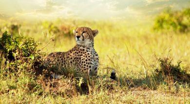 Example private tour: Authentic Tanzania – Wildlife & Pristine Beach