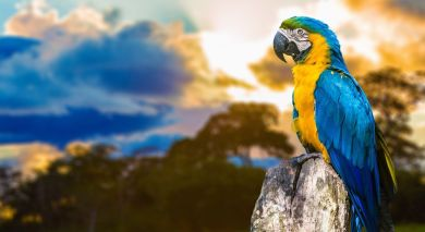 Example private tour: Brazil's Wildlife, Waterfalls and Beach